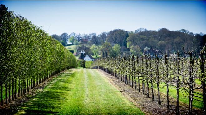 Hush Heath wine estate vineyard