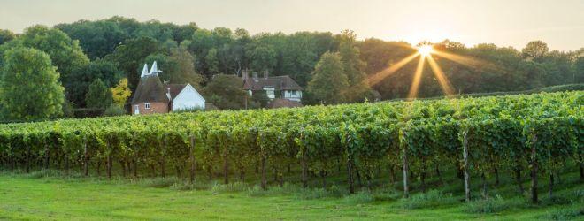 Hush Heath Estate English winery vineyard Kent